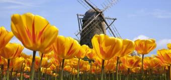 Życie w Holandii – jakie jest, ile kosztuje utrzymanie?